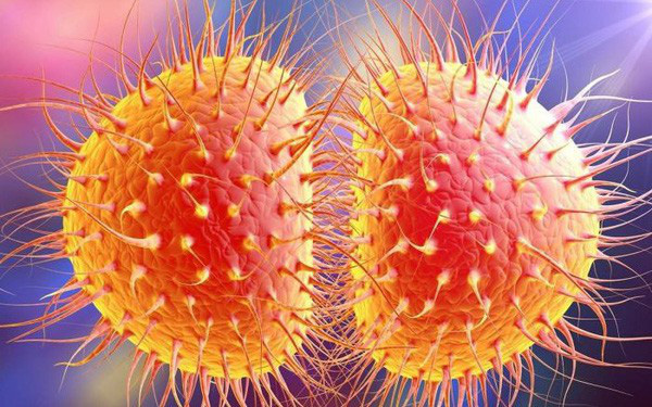 lau-cau-neisseria-gonorrhoeae